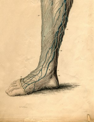 achilles-tendon5